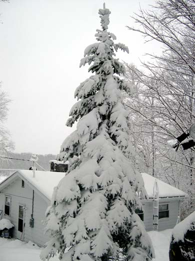 heavy snow on tree