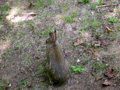 bunny-sm.jpg
