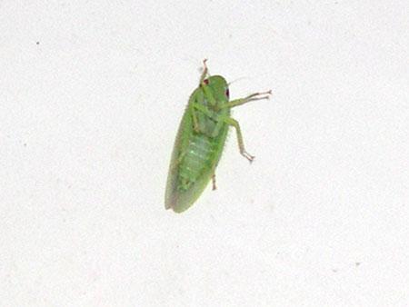 greenBugCloseup.jpg