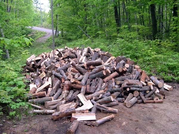 wood2006.jpg